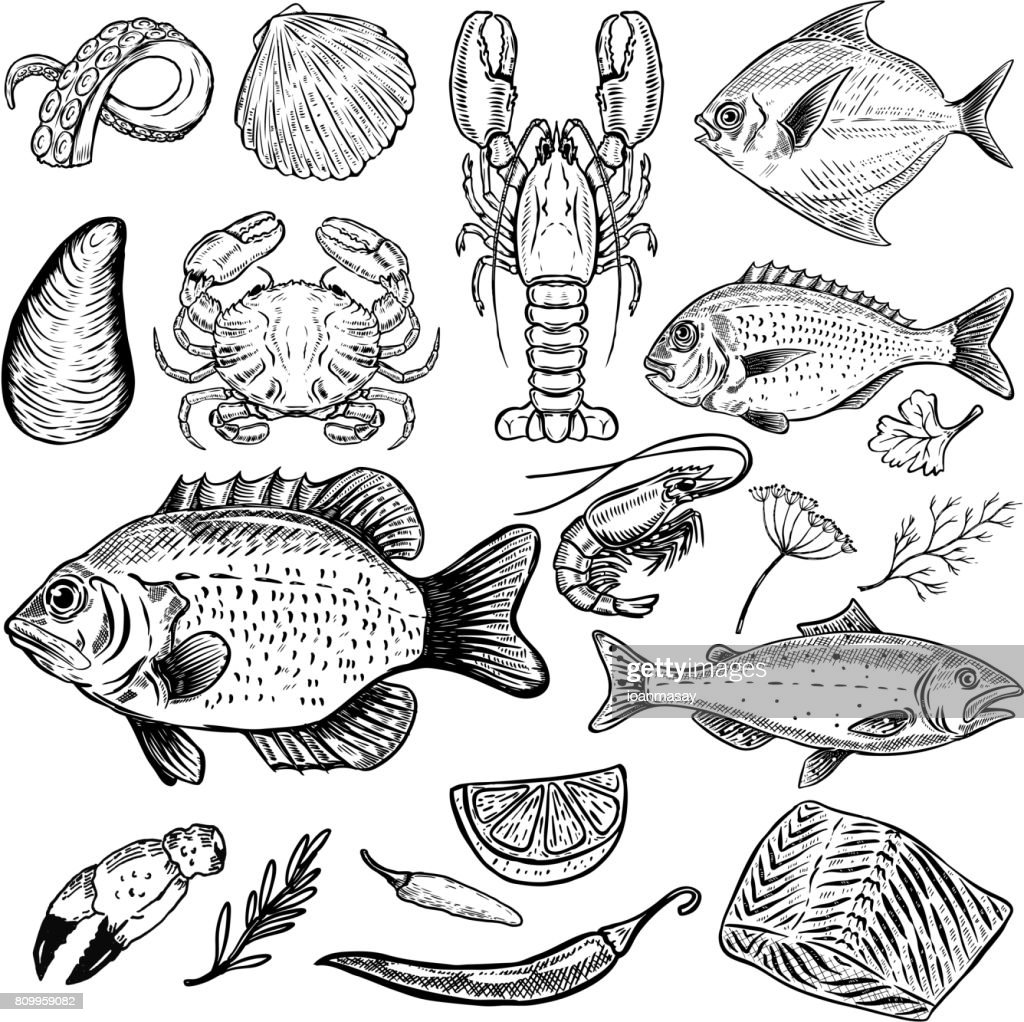 Set of hand drawn seafood illustrations isolated on white background. Fish, crab, lobster, oyster, shrimp. spices. Design elements for menu, poster. Vector illustration