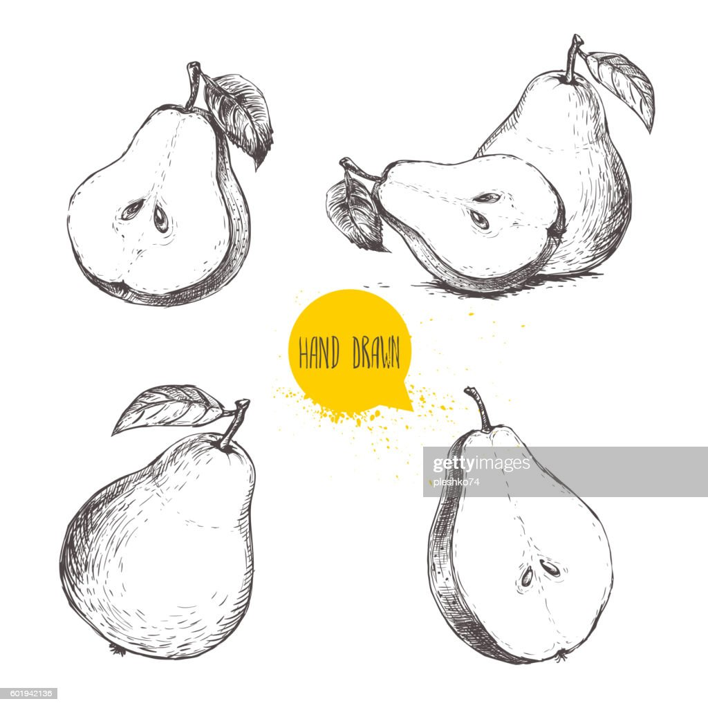 Set of hand drawn sketch style pears.