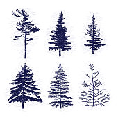 Set of hand drawn textured fir tree vector illustration. Silhouette of the grunge pine trees.
