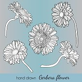 Set of hand drawn vector gerbera flowers.
