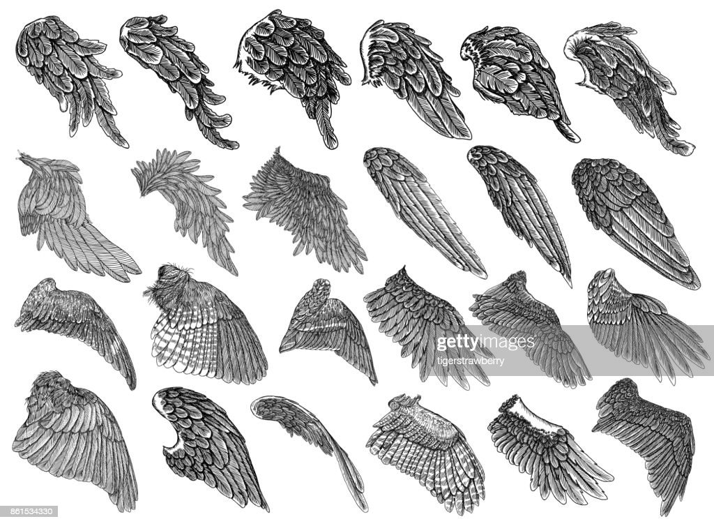 Set of hand drawn vintage etched woodcut angel or bird detailed wings. Heraldic wings for tattoo and mascot design. Isolated sketch collection vector. Card, poster, t-shirt, smart phone, CD print.
