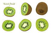 Set of hand-drawn kiwi fruit, single, peeled and sliced fruits. realistic drawing, isolated on white background
