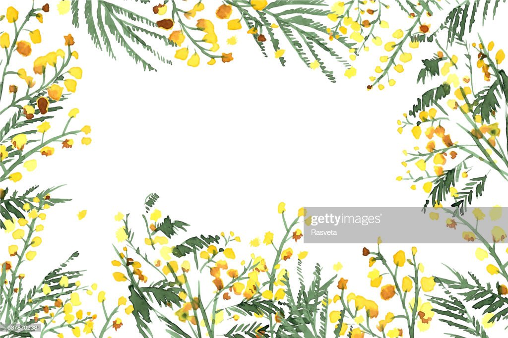 Set of Hand-Drawn Mimosa