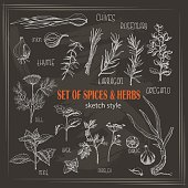 Set of Herbs and spices in sketch style on dark