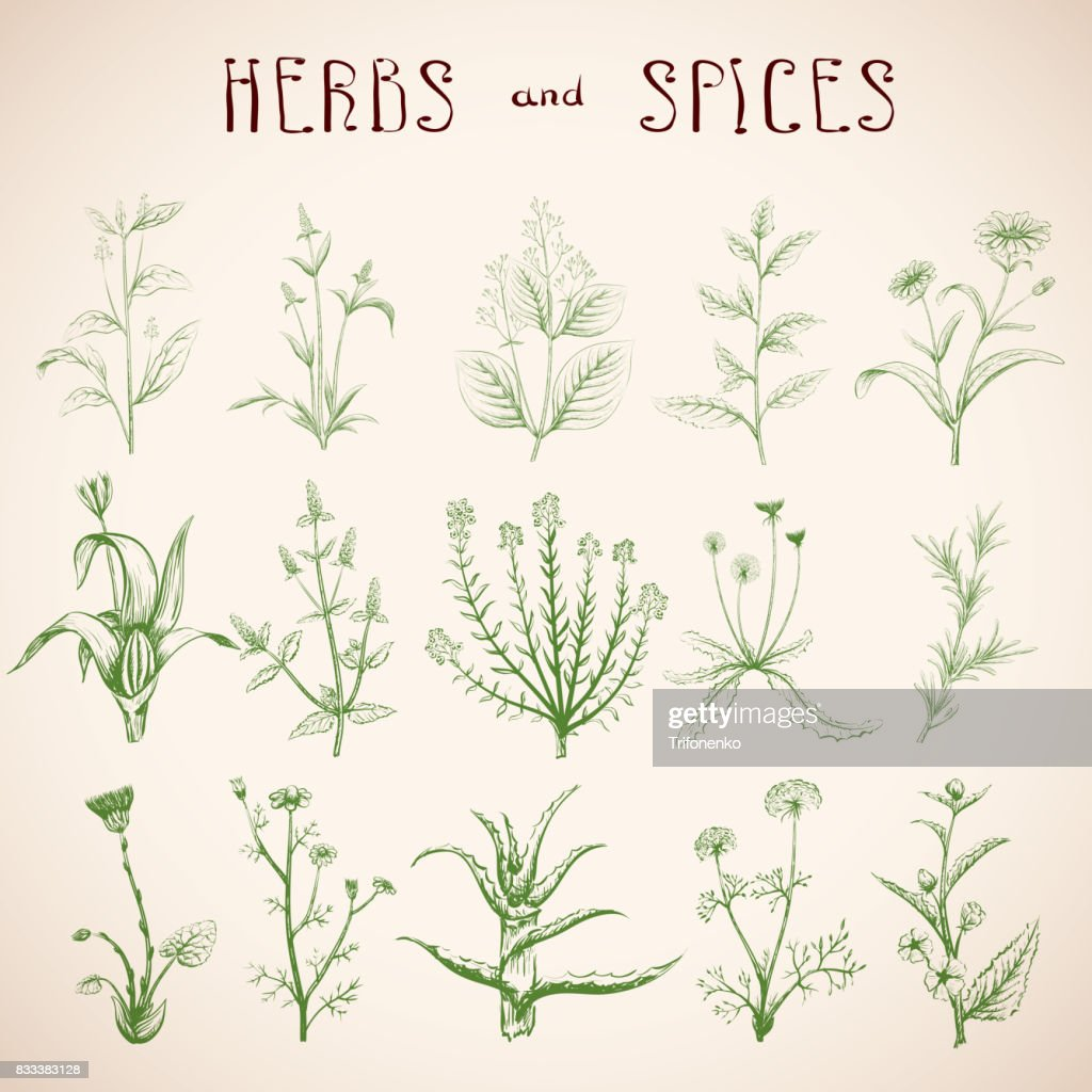 Set of herbs and spices.