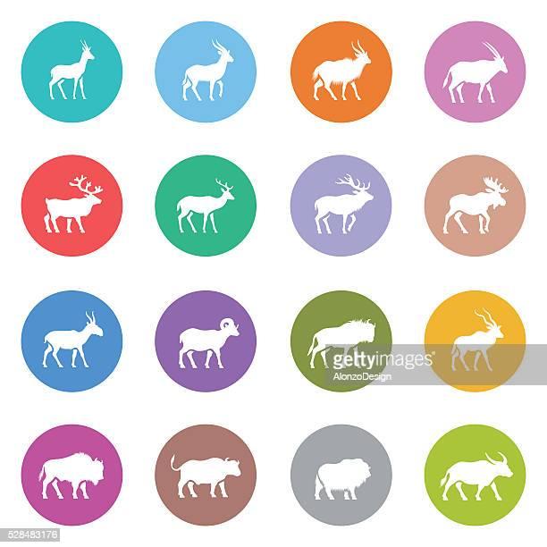 set of horned animal icons - kudu stock illustrations, clip art, cartoons, & icons