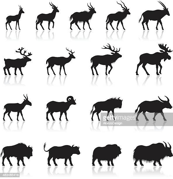 set of horned animal silhouettes - african buffalo stock illustrations, clip art, cartoons, & icons