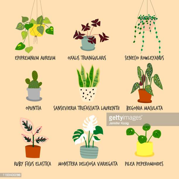 set of houseplant illustrations - houseplant stock illustrations