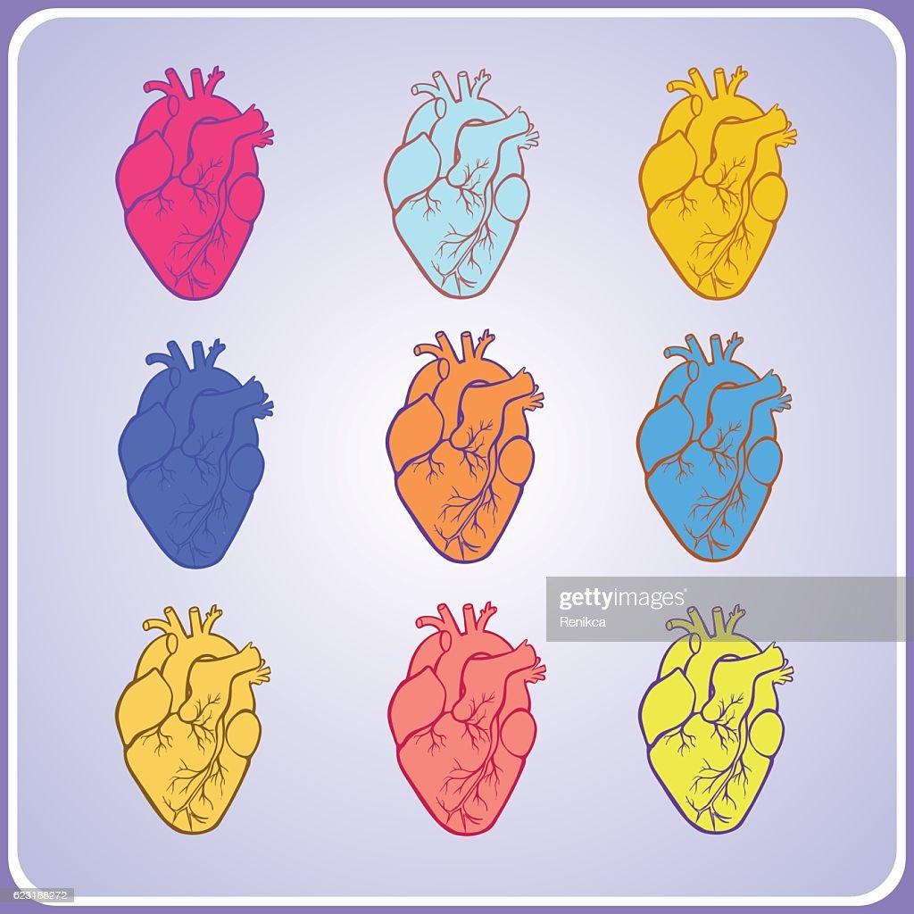 set of human hearts for medical designation