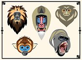 Set of images of heads of monkeys