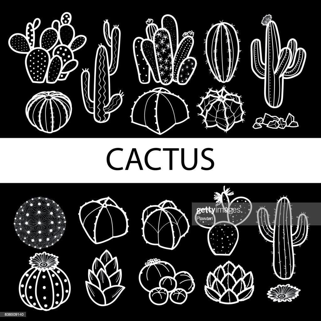 Set of isolated cactus and succulents in white outline & black plane. Vector illustration.