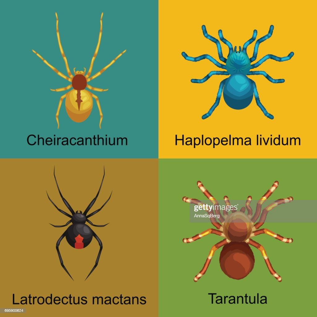 Set of isolated dangerous pest spiders with toxic poison like tarantula or black widow, icons collestion poisonous insects that have eight furry legs, danger warning vector illustration