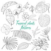 Set of isolated tropical plants and flowers