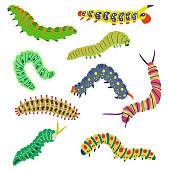 A set of isolated vector bright caterpillars