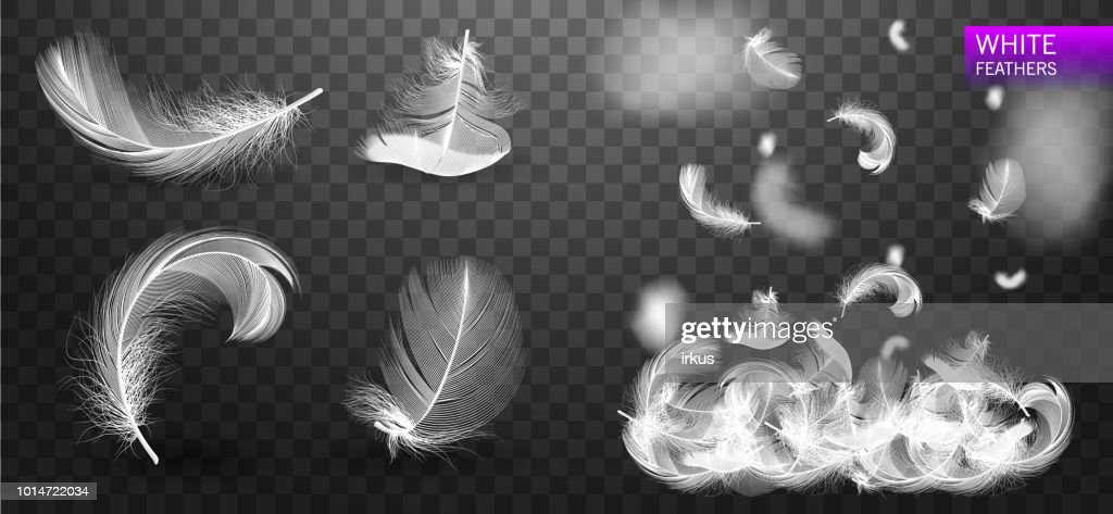 Set of isolated white fluffy feathers on transparent background. Falling twirled realistic feathers isolated on a transparent background. Vector Illustration