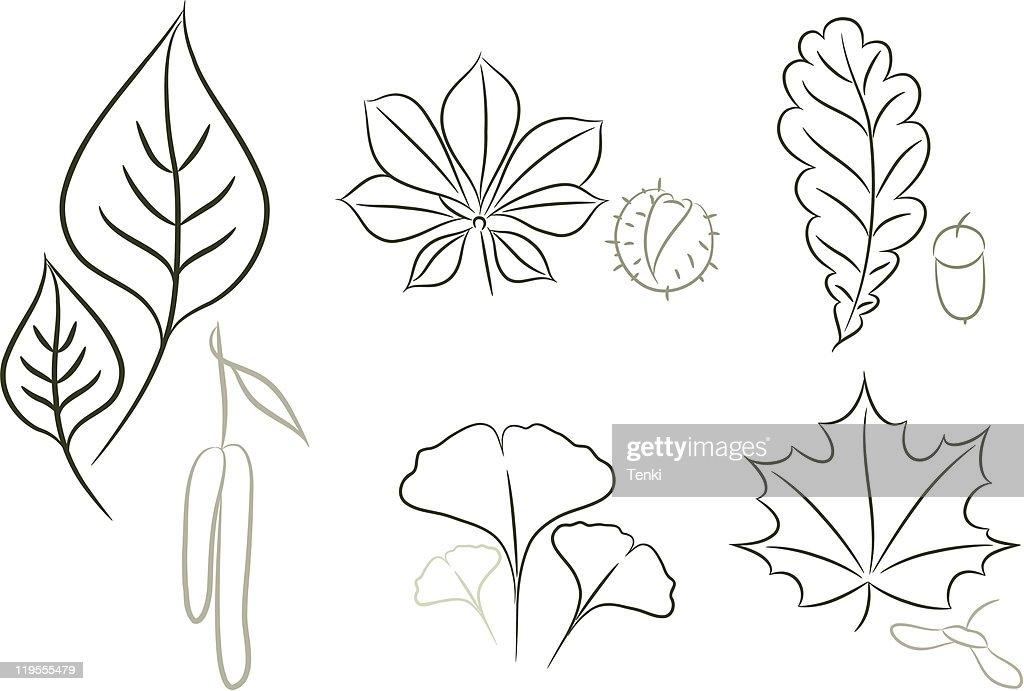 Set of leaf sketch
