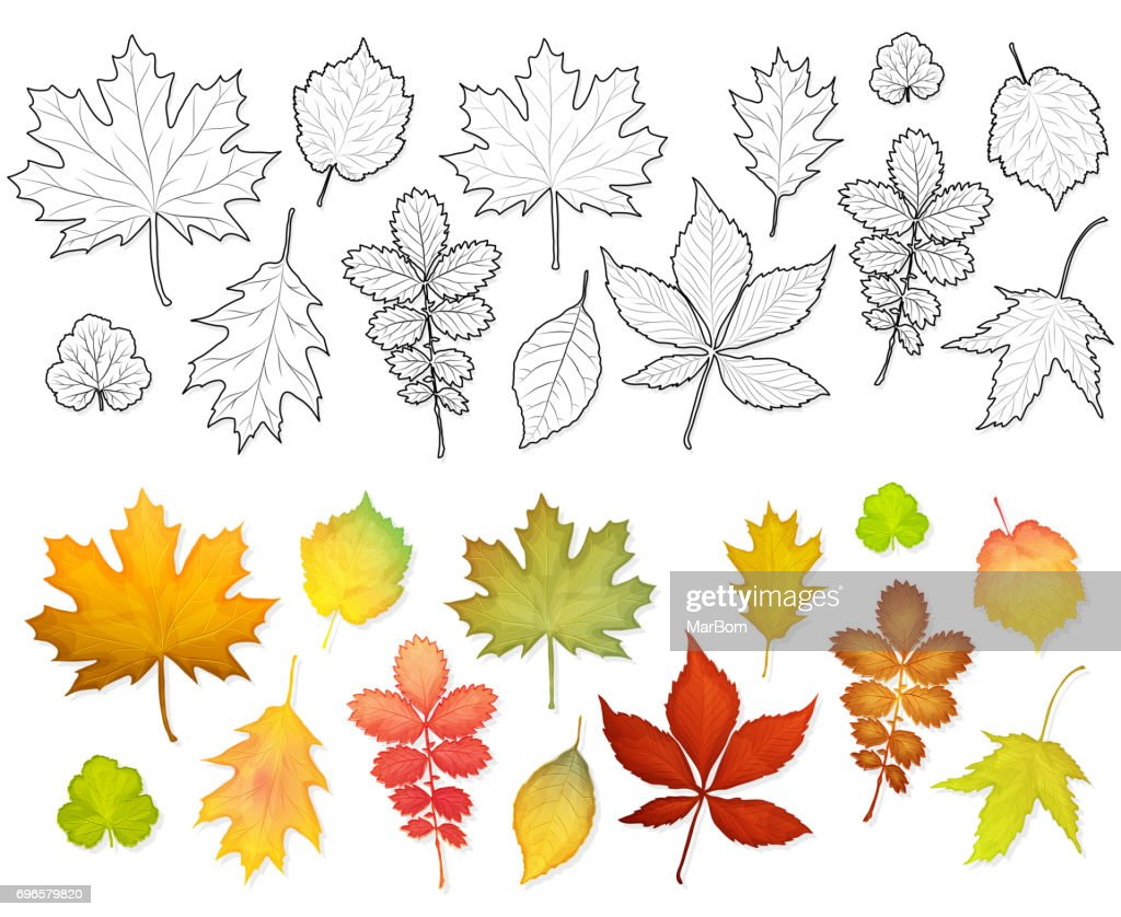 Set of leaves for colouring book vector