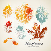 Set of leaves. Seasonal collection.