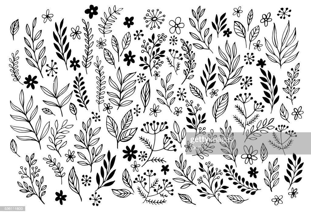 Set of   line doodles  hand drawn design floral elements
