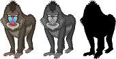 Set of mandrill baboon character