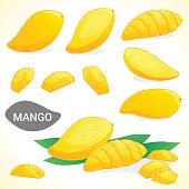 Set of mango in various styles vector format
