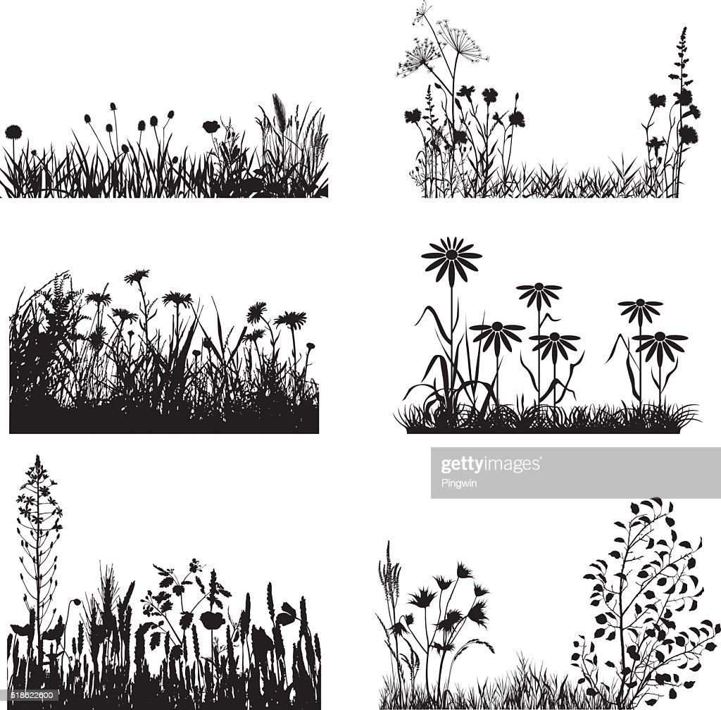 Set of meadow plants