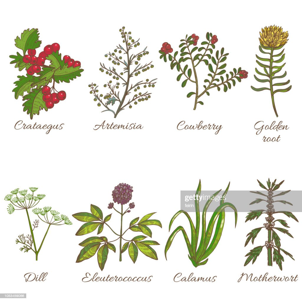Set of Medicinal Plants in Hand Drawn Style