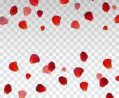 Set of Naturalistic Rose Petals on transparent background. Vector Illustration