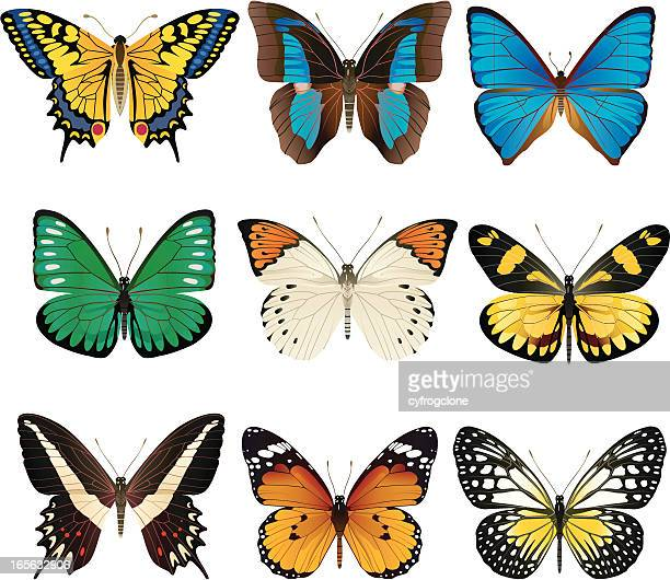 set of nine butterflies on white background - swallowtail butterfly stock illustrations