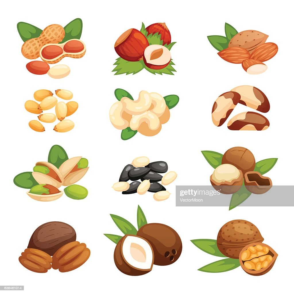 Set of nuts vector illustration.
