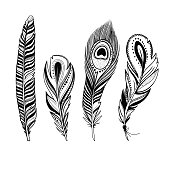 set of ornamental feathers