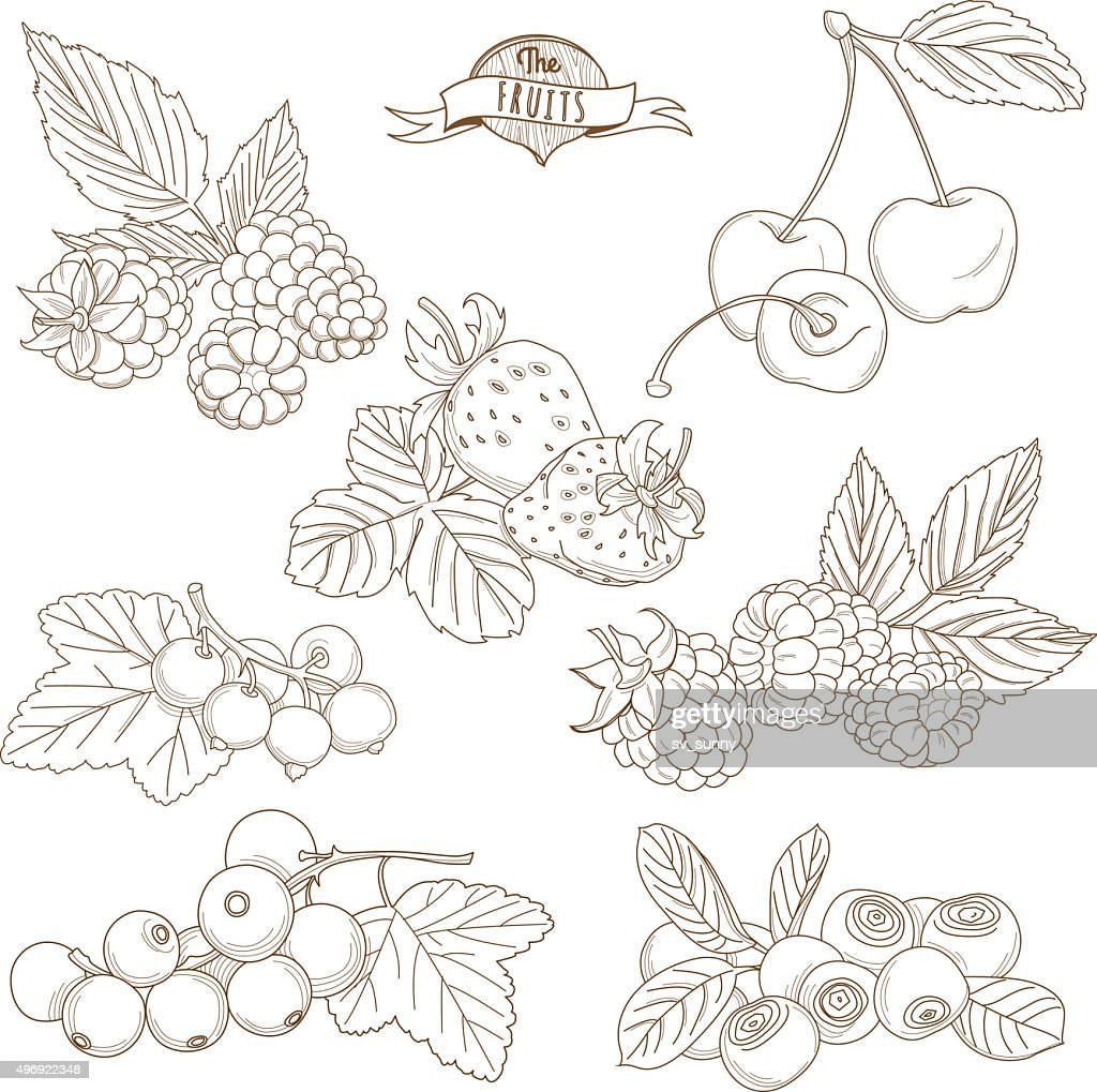 Set of Outline hand drawn berries