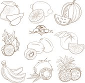 Set of Outline hand drawn fruits with leaves