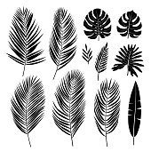 Set of palm leaves. Tropical plants. Vector collection.