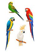 Set of parrots isolated on white background. Vector illustration.