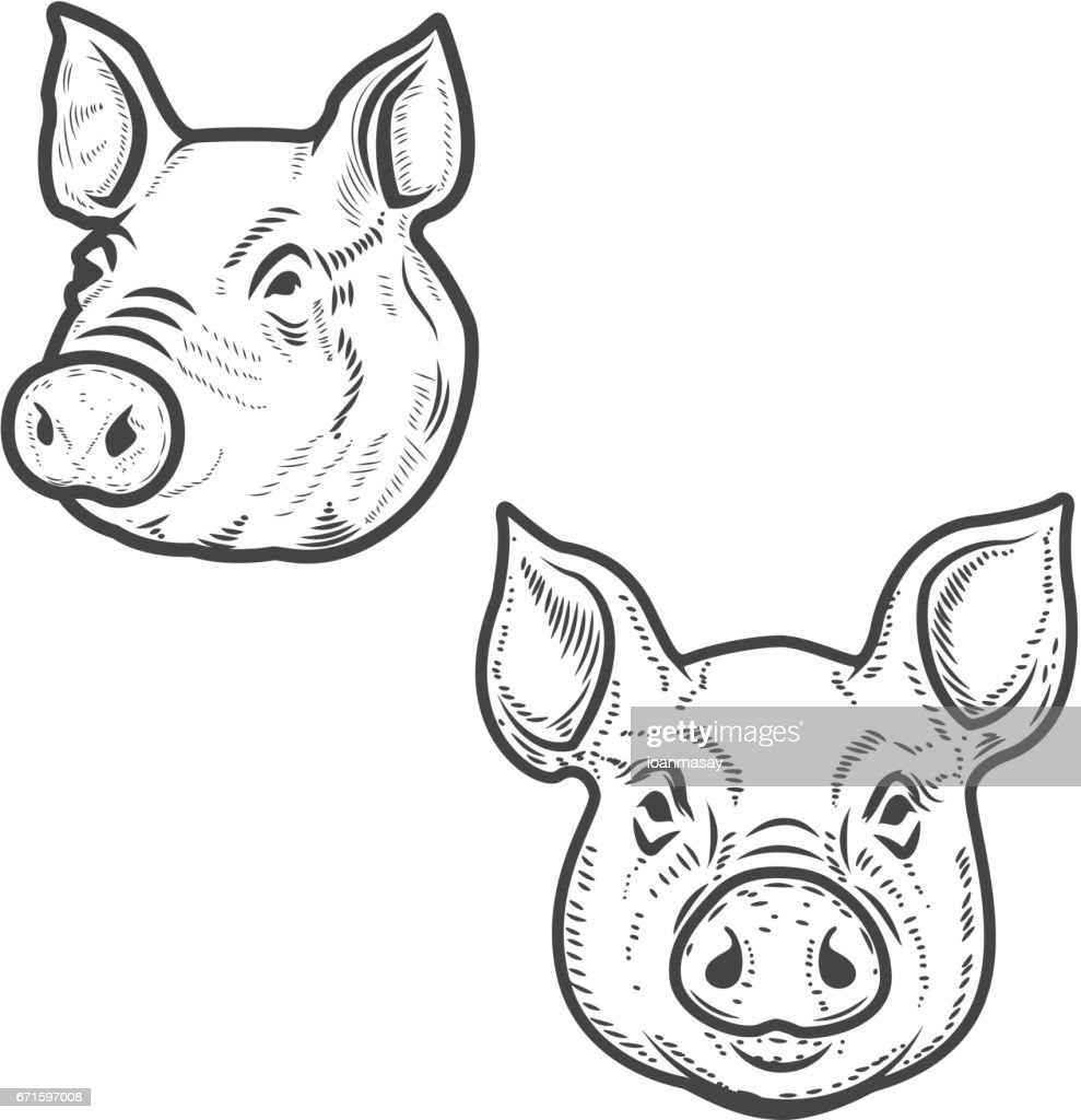 Set of pig heads isolated on white background. Pork meat. Design element for icon, label, emblem, sign, poster. Vector illustration.