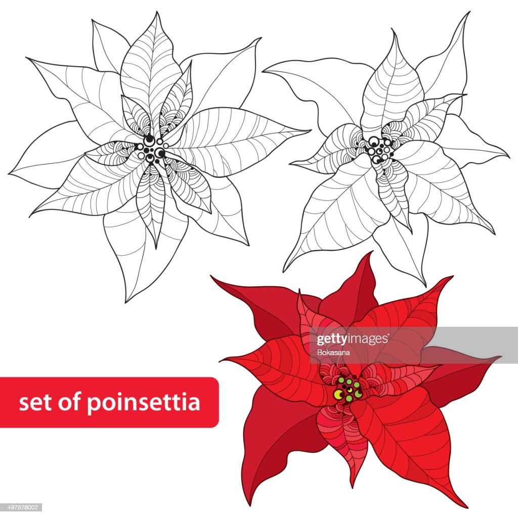 Set Mit Weihnachtsstern Oder Weihnachten Sterneisoliert Auf Weißem ...