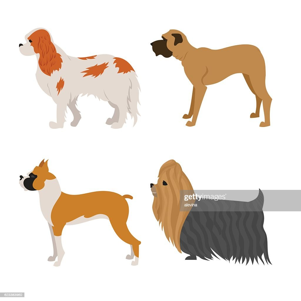 Set of purebred dogs