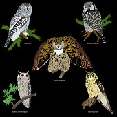 set of realistic owls on branches on black background
