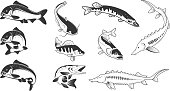 Set of river fish marks. River carp,