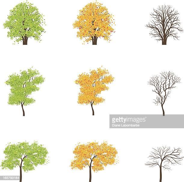Set di icone Albero di stagione