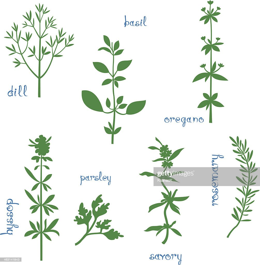 Set of seven illustrations of aromatic herbs