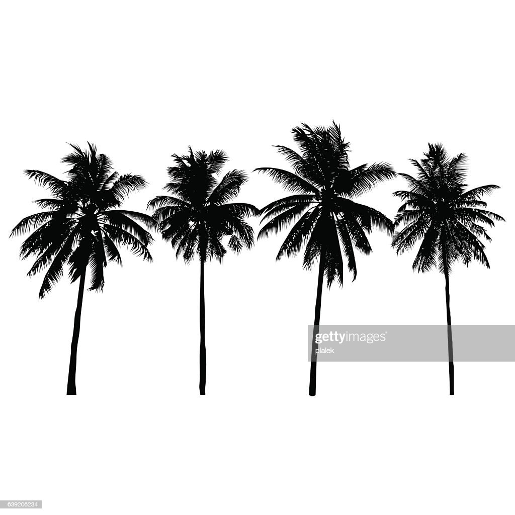 set of silhouette coconut trees, natural sign, vector illustration