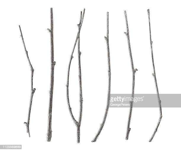 set of six twigs cut out on white background - twig stock illustrations