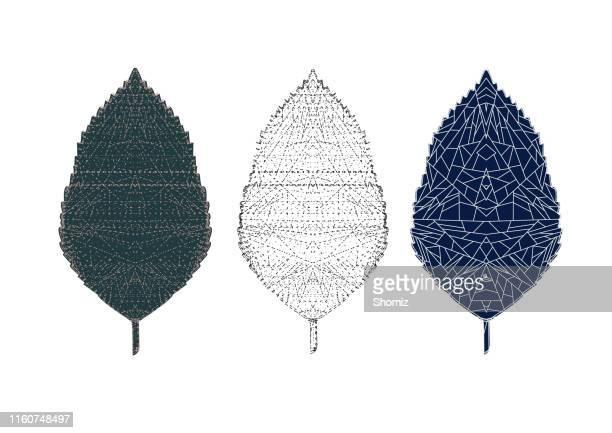 set of skeletons leaves - aspen tree stock illustrations