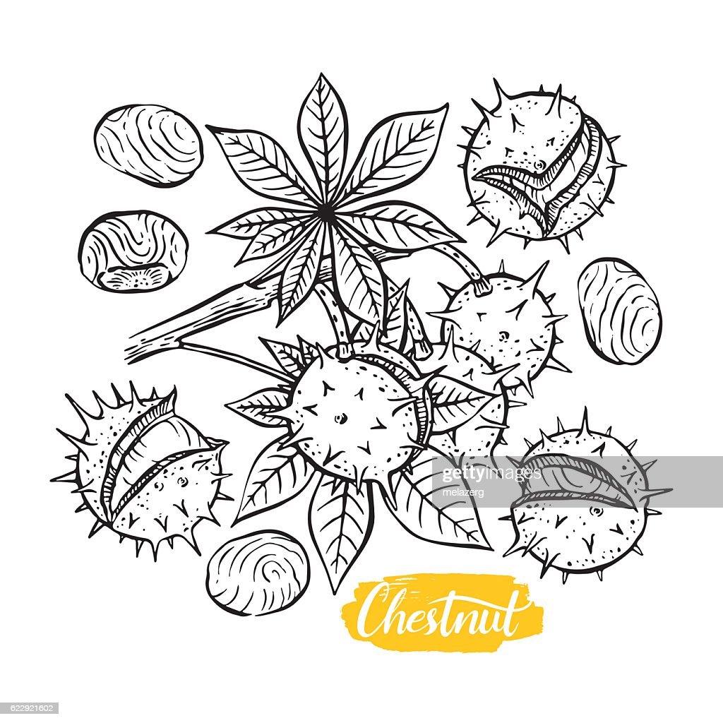set of sketch chestnuts