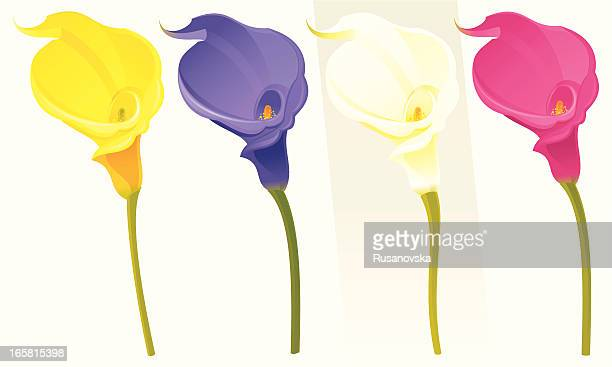 set of spring flowers (calla lily) - calla lily stock illustrations, clip art, cartoons, & icons