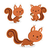 Set of squirrel in different pose. Vector illustration.