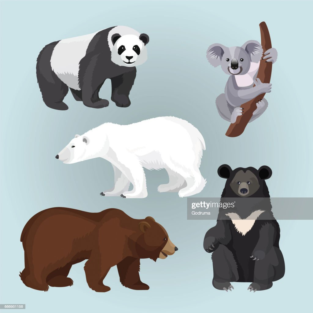 Set of standing, sitting and creeping bears isolated on blue.