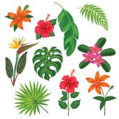 Set of stylized tropical plants, leaves and flowers. Objects for